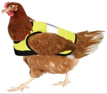 chicken_hi_vis_jacket_yellow_chicken.jpg