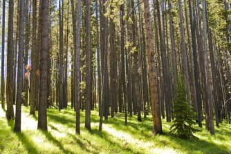 Healthy forest conditions